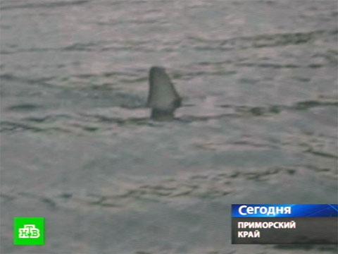 Купаться запретили из-за нападения акулы.  НТВ.Ru: новости, видео...