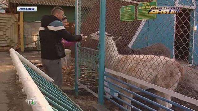 добровольцы спасают голодной смерти животных зоопарке луганска
