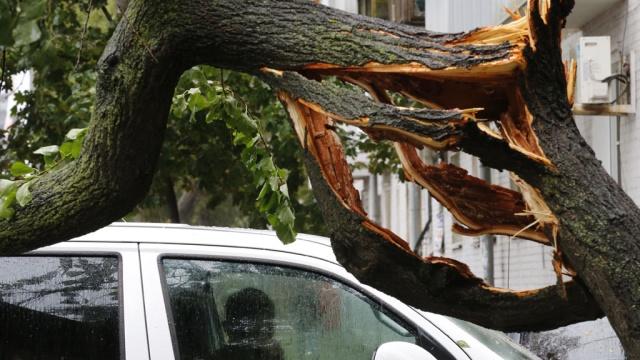 Упавшие деревья перекрыли движение на двух улицах Москвы