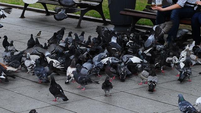 крайней Криминал кража голубей в юго западном было