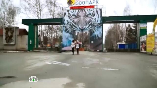 Семья покусанной тигром школьницы подает в суд на зоопарк