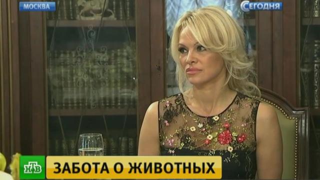 памела андерсон встретилась сергеем ивановым кремле