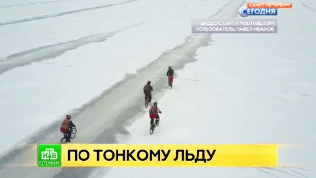 Экстремалы устроили велозабег по льду Финского залива