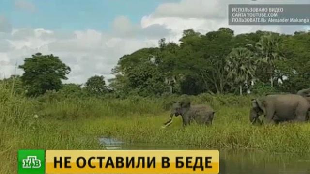 Как в сказке Киплинга: слоненок спас свой хобот от крокодила