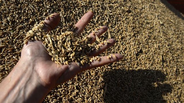 Турция отрицает введение новых ограничений на импорт российского зерна