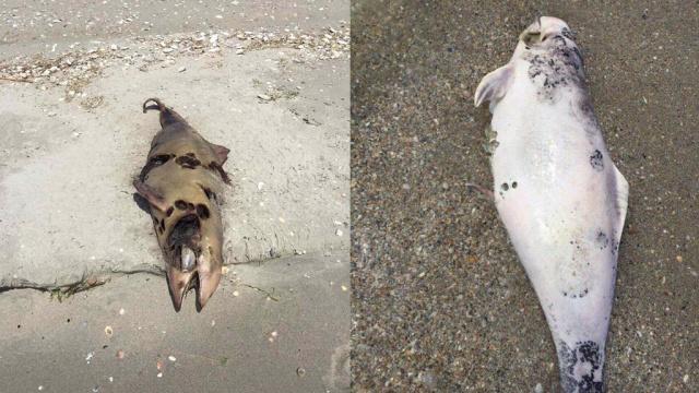 Под Одессой на берег выбросило десятки задохнувшихся дельфинов
