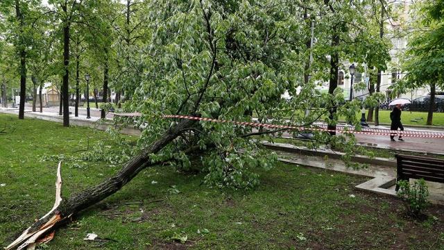 В Москве из-за грозы объявлен желтый уровень опасности