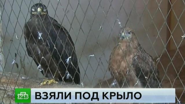 прокуроры дагестане изъяли частного зоопарка краснокнижных птиц