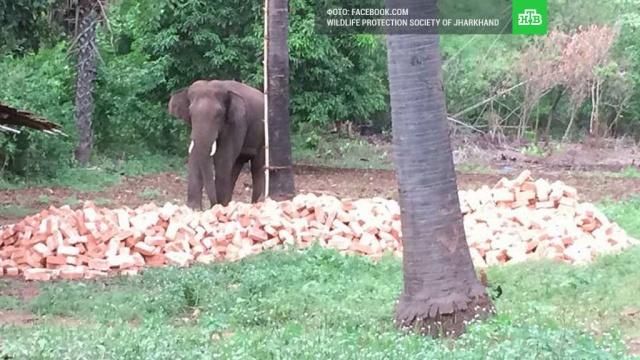 В Индии застрелили слона, убившего 15 человек