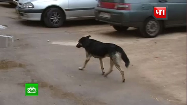 Многодетный отец открыл стрельбу по бродячей собаке на детской площадке
