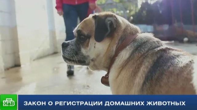 Усы, лапы, хвост: чего ждать от закона о регистрации домашних животных