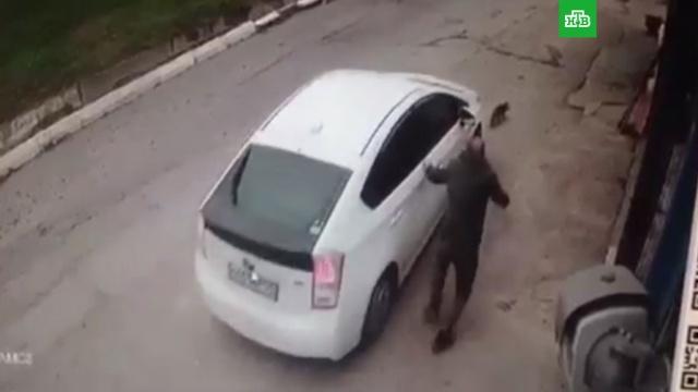 Жительница Владивостока специально задавила пса на глазах у хозяина: видео