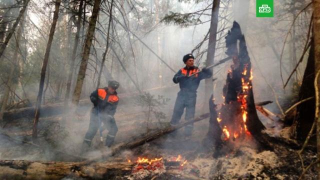 В Приморье за сутки ликвидировали 17 лесных пожаров