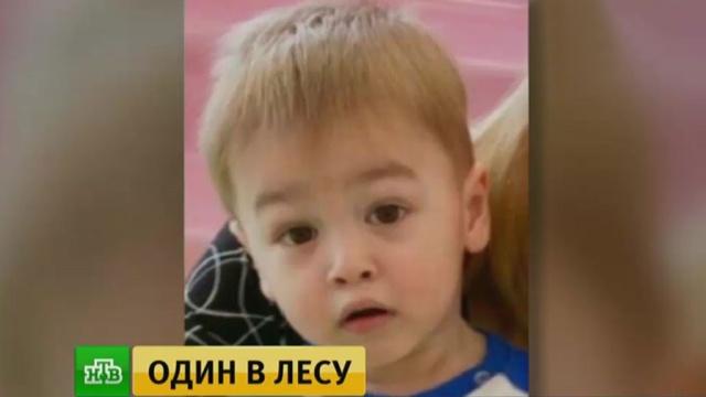 Под Нижним Новгородом ищут потерявшегося в лесу 4-летнего мальчика