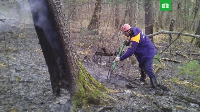 В Приморье за сутки потушили 700 гектаров горящих лесов