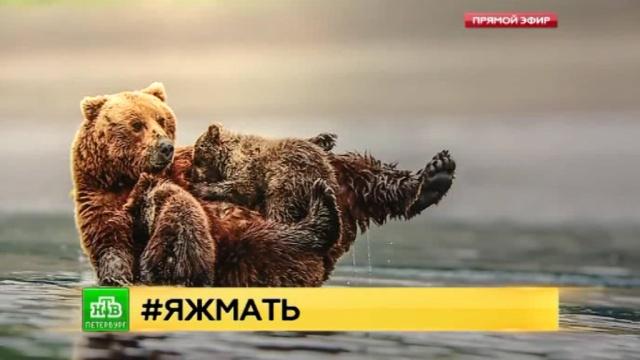 В Петербурге собрали самые трогательные фото мам и детенышей