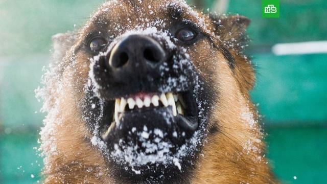 Бешеный пес напал на рабочих в Ростовской области
