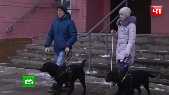 В Ульяновске пассажиры встали на защиту инвалидов, которых не пускали в автобус