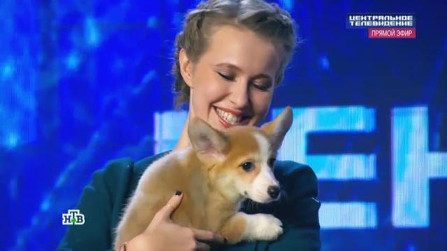 Ксения Собчак спела в студии НТВ и получила в подарок щенка