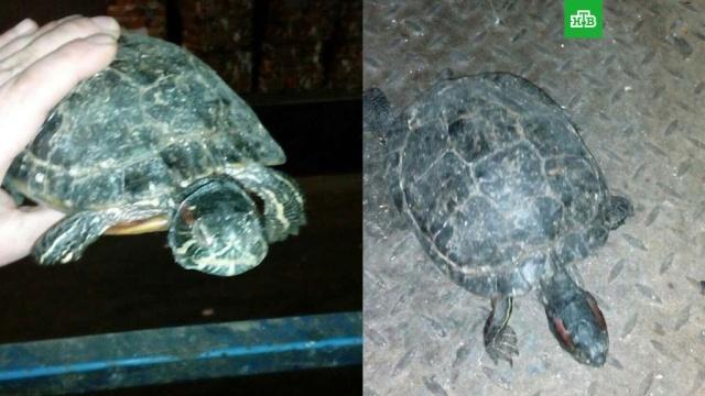 Сотрудники мусорного завода спасли черепаху от смерти в куче отходов