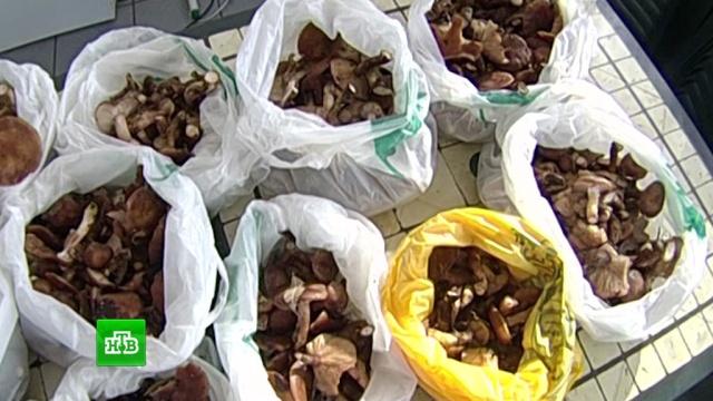 Россиянам разрешат законно продавать грибы