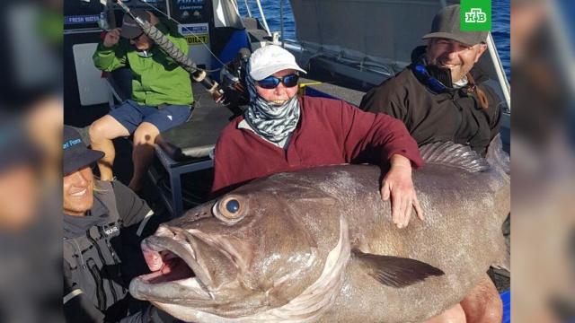 Пенсионерка поймала гигантского окуня на рыбалке в Австралии: фото