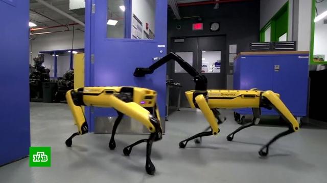 Эксперты предсказали, когда в мире начнется восстание машин