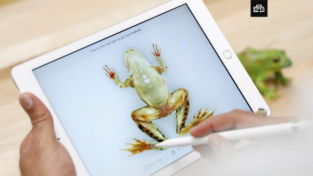 Apple представила самый дешевый iPad