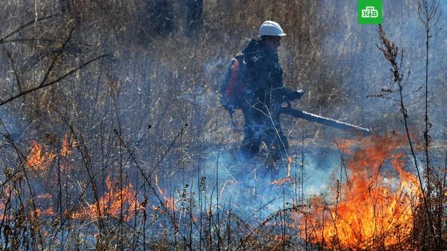 Рослесхоз: площадь природных пожаров на Дальнем Востоке выросла на 9 тысяч гектаров