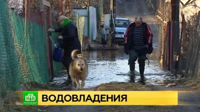 Десятки петербуржцев не могут дождаться помощи в затопленном садоводстве