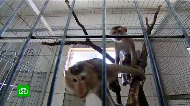 В саранском зоопарке приютят вывезенных контрабандой из Вьетнама макак