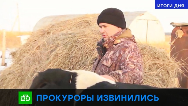 Владелец коровы со шпионским трекером принял извинения прокуратуры