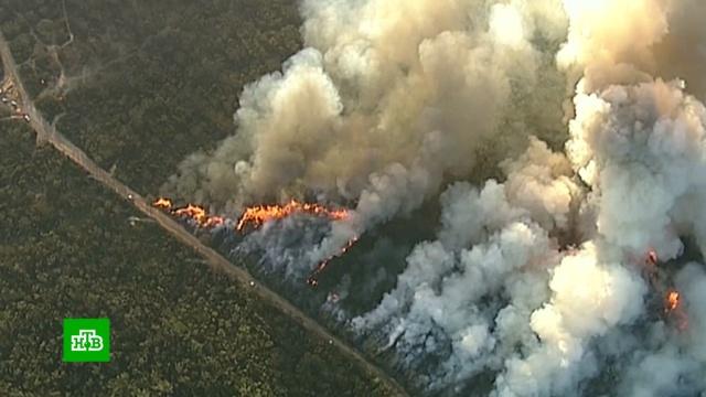Лесные пожары подступают к пригородам Сиднея