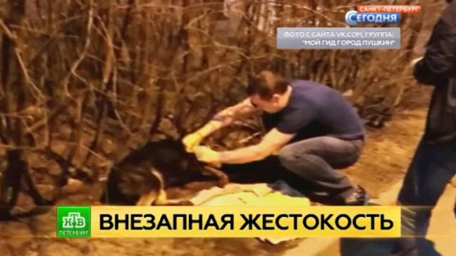 Убившего своего пса петербуржца отправят на психиатрическую экспертизу