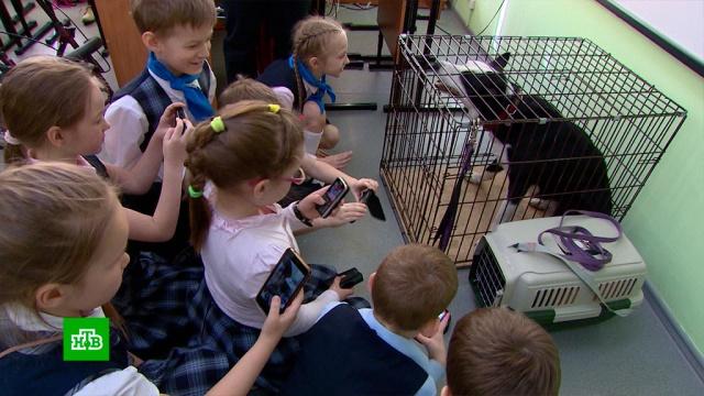В Красноярске детям разрешили ходить в школу с домашними животными