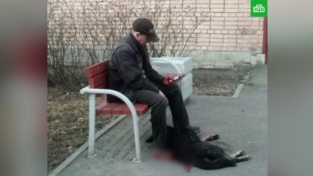 В Петербурге пьяный мужчина зарезал собаку на глазах у ребенка