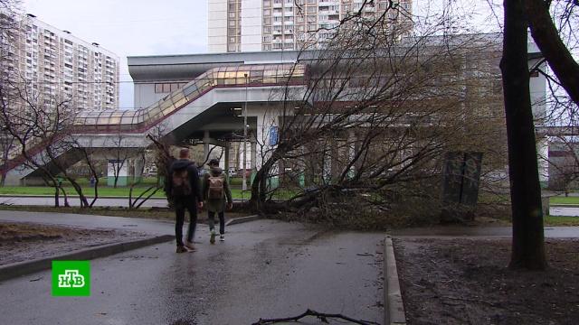 Синоптики советуют россиянам привыкать к разрушительным ураганам