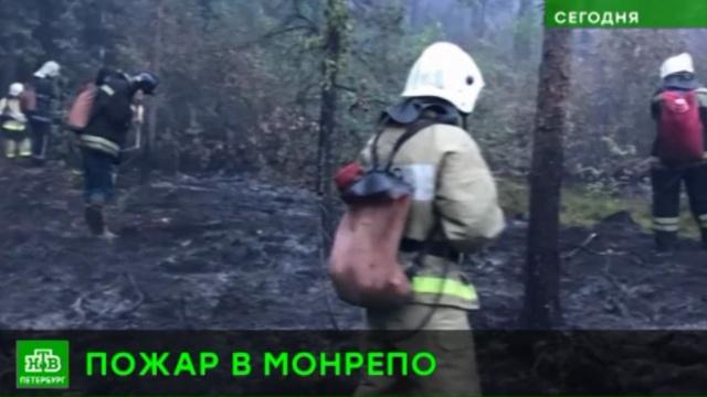 В Ленобласти выгорел лес в музее-заповеднике Монрепо