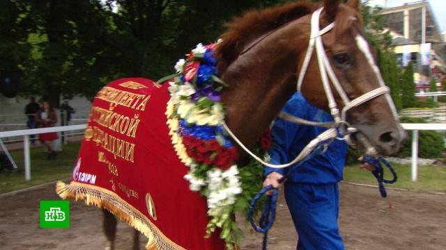 Конь Алексея Миллера выиграл знаковый заезд президентских скачек