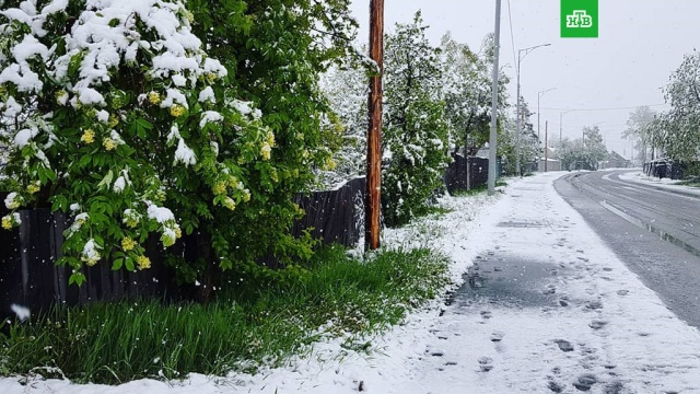камчатке начале лета снег