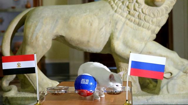 Кот Ахилл из Эрмитажа снова пожелал успеха сборной РФ