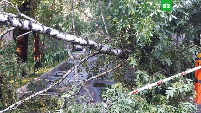 Ураганный ветер в Москве повалил десятки деревьев