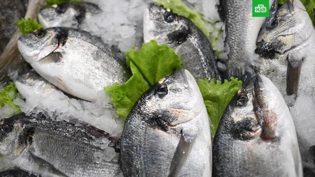 Сумеет ли Росрыболовство накормить страну рыбой по доступным ценам: расследование НТВ