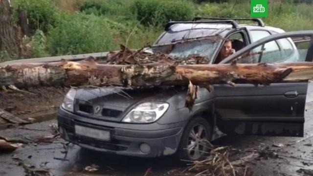 Пять автомобилей и 16 деревьев: в Москве ликвидируют последствия сильной грозы
