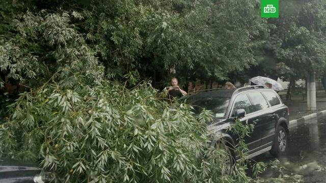 Мощная буря повалила семь деревьев в Подольске