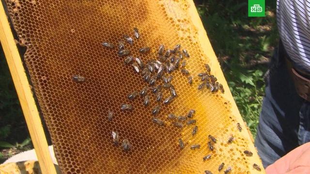 В Ульяновской области после распыления химикатов начался массовый мор пчел