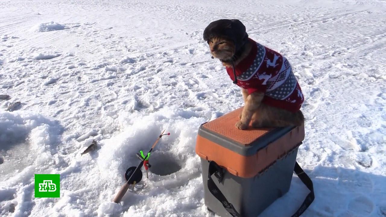 как собрать зимнюю рыбалку